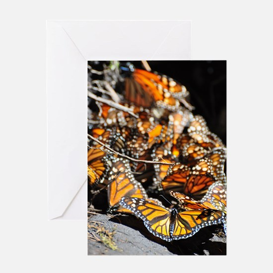 Monarch Butterflies 2 Greeting Cards