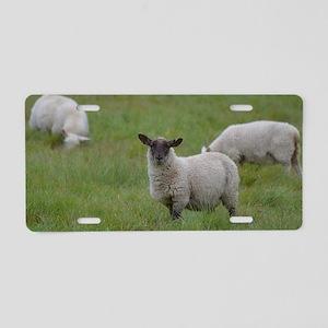 Herd of Sheep Aluminum License Plate