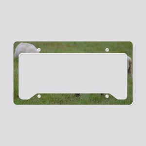 Herd of Sheep License Plate Holder
