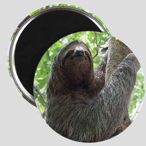 Sloth in a Tree Magnet