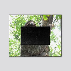 Sloth in a Tree Picture Frame