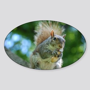Hungry Little Squirrel Sticker (Oval)