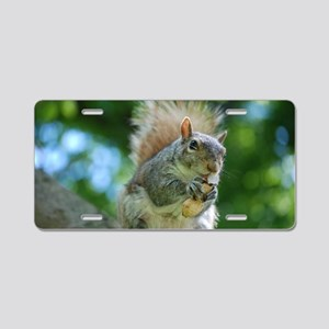 Hungry Little Squirrel Aluminum License Plate