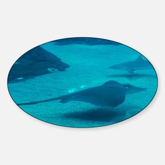 Stingray Gliding on the Ocean Floor Sticker (Oval)