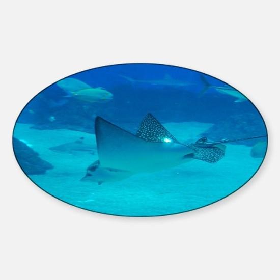 Diving Stingray Sticker (Oval)