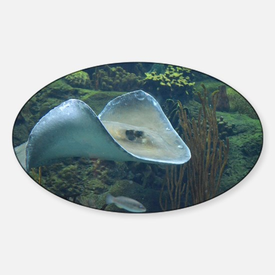 Stingray Flying Through the Water Sticker (Oval)