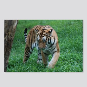 Tiger on the Prowl Postcards (Package of 8)