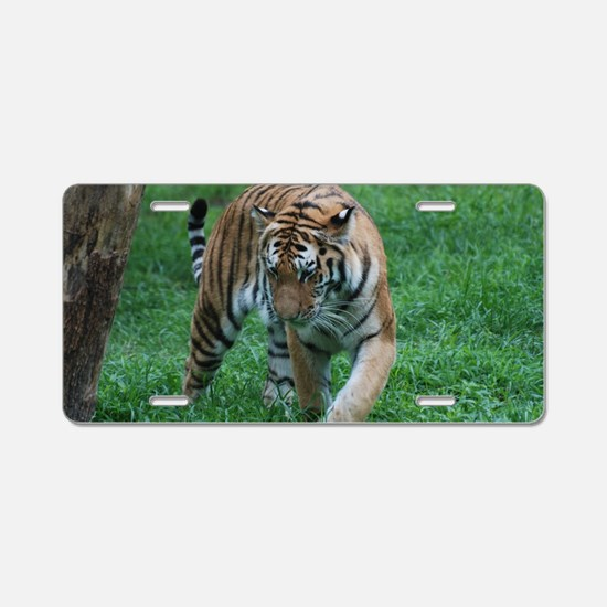 Tiger on the Prowl Aluminum License Plate