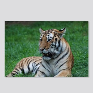 Gorgeous Tiger Postcards (Package of 8)