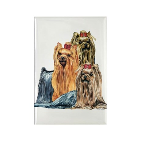 Yorkshire Terrier Yorkie Collage Rectangle Magnet