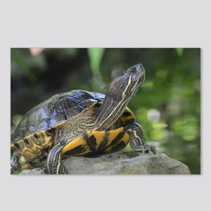 Turtle on a Rock Postcards (Package of 8)