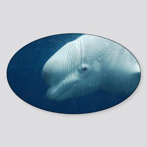 White Whale Sticker (Oval)