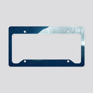 White Whale License Plate Holder