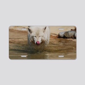 White Wolf Licking His Nose Aluminum License Plate