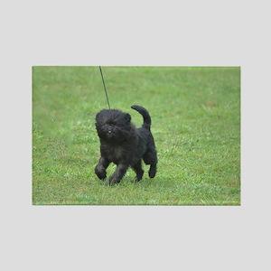 Black Affenpinscher Dog Rectangle Magnet