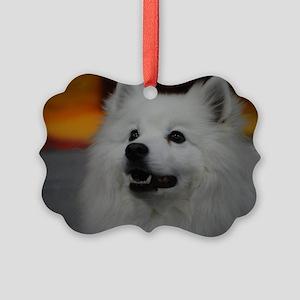 American Eskimo Dog Picture Ornament