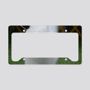 Grinning American Eskimo Dog License Plate Holder