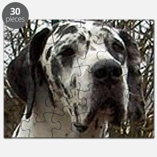 great dane harlequin Puzzle
