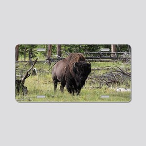 Bison of Yellowstone Photo Aluminum License Plate