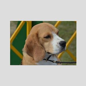 Adorable Beagle Rectangle Magnet