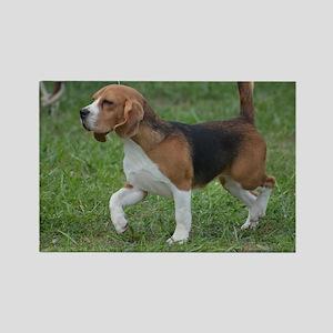 Really Cute Beagle  Rectangle Magnet