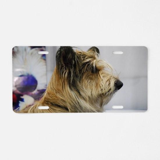 Shaggy Berger Picard Dog Aluminum License Plate