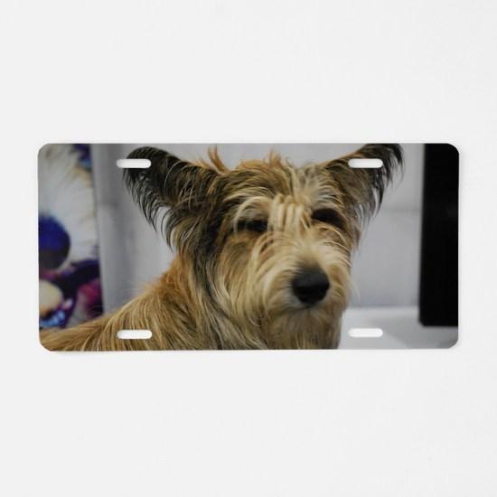 Cute Berger Picard Dog Aluminum License Plate