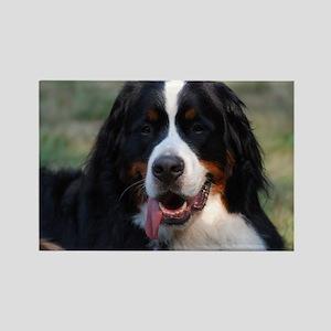 Adorable Bernese Mountain Dog Rectangle Magnet