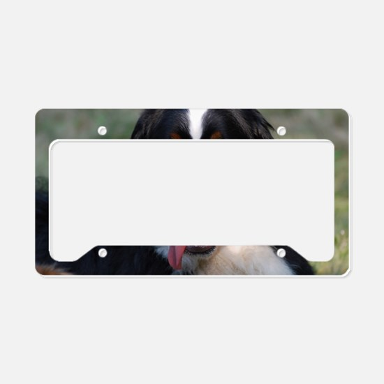 Adorable Bernese Mountain Dog License Plate Holder