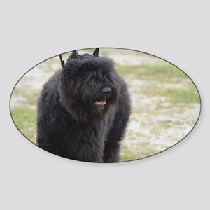 Black Cattle Dog Sticker (Oval)