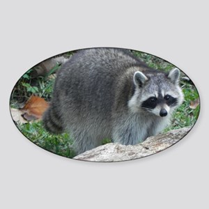 Fluffy Racoon Sticker (Oval)