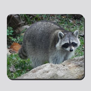 Fluffy Racoon Mousepad