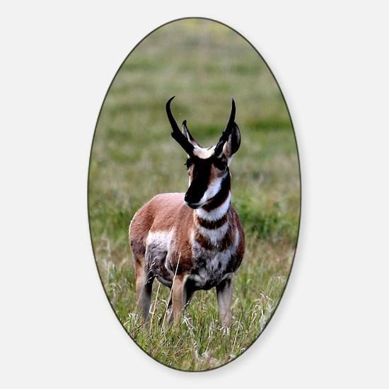 Pronghorn by in Meadow Sticker (Oval)