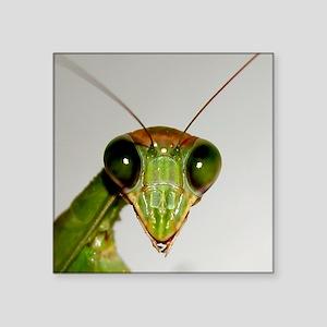 Preying Mantis Eyes Sticker