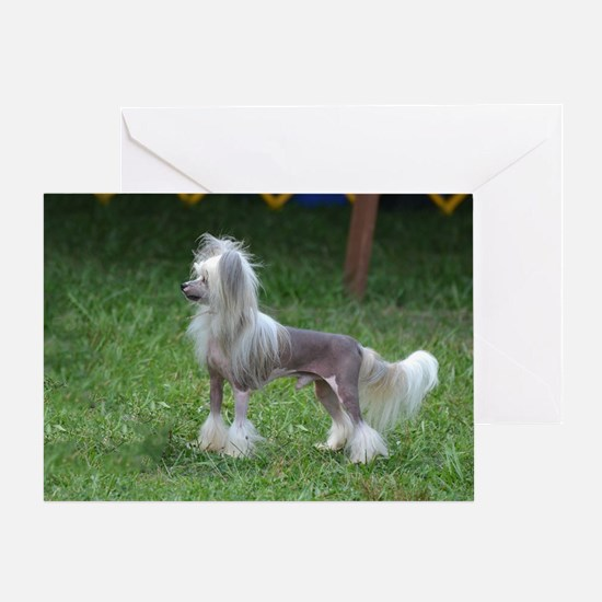 Small Chinese Crested Dog Greeting Card