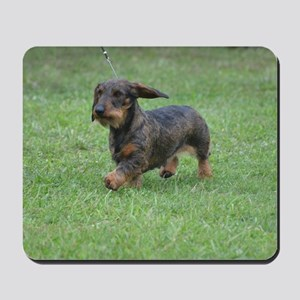 Cute Wire Haired Dachshund Mousepad