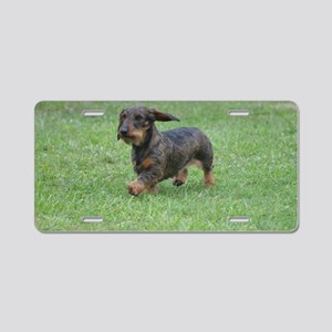 Cute Wire Haired Dachshund Aluminum License Plate