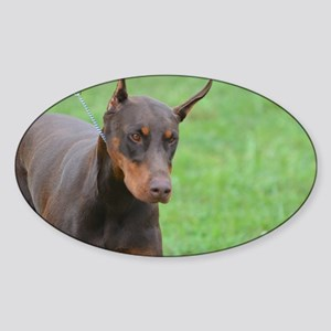Cute Brown Doberman Pinscher Sticker (Oval)