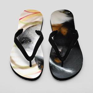 Greater Swiss Mountain Dog Flip Flops