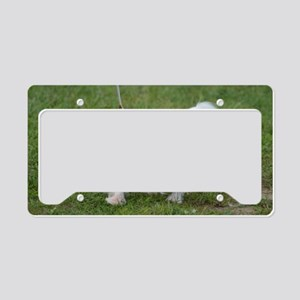 Japanese Spaniel Dog License Plate Holder