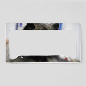 Keeshond License Plate Holder