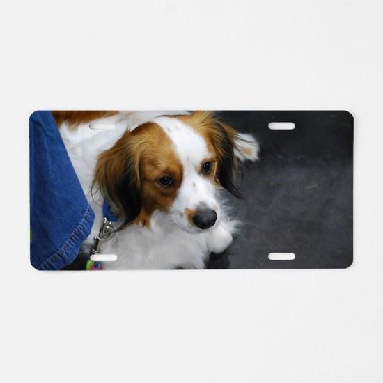 Kooikerhondje Dog Aluminum License Plate