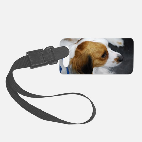 Brown and White Kooikerhondje Luggage Tag
