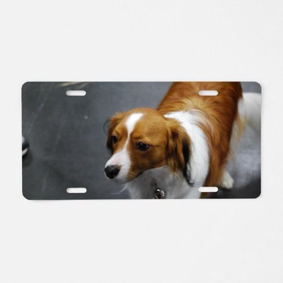 Adorable Kooikerhondje Dog Aluminum License Plate