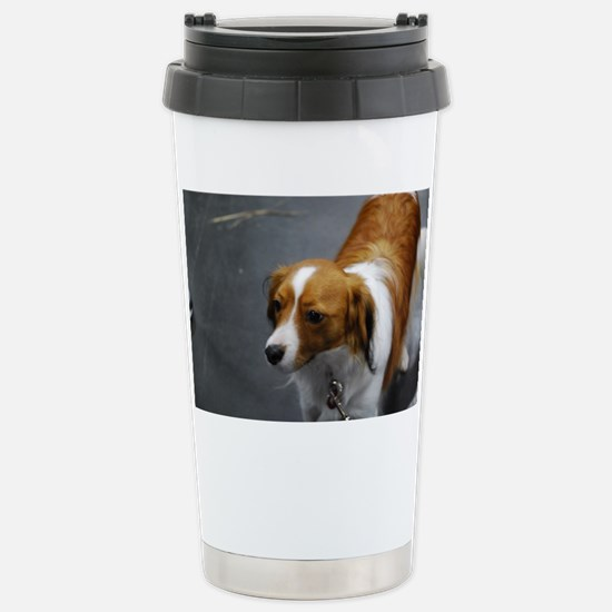 Adorable Kooikerhondje  Stainless Steel Travel Mug