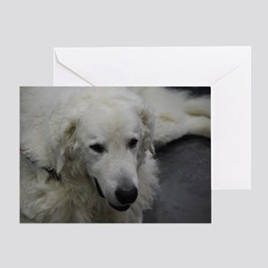 Kuvasz Dog Greeting Card