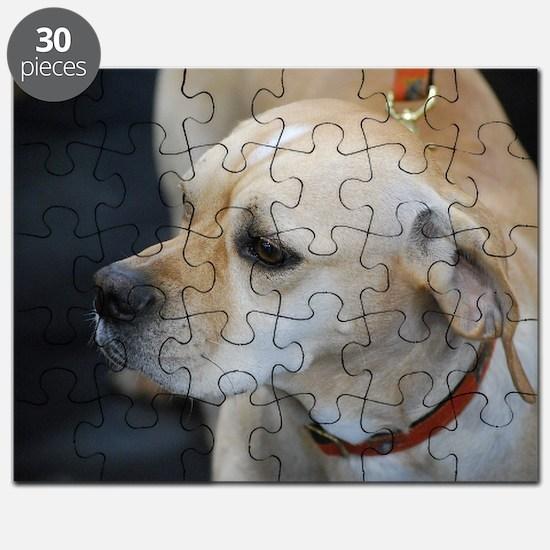 Portuguese Pointer Puzzle