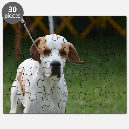Sweet Portuguese Pointer Puzzle