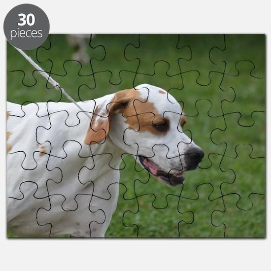 Profile of a Portuguese Pointer Puzzle