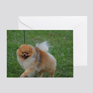 Cute Pomeranian Greeting Card